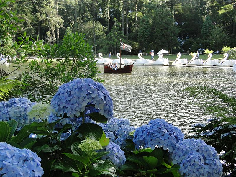 Hortênsia no Lago Negro em Gramado